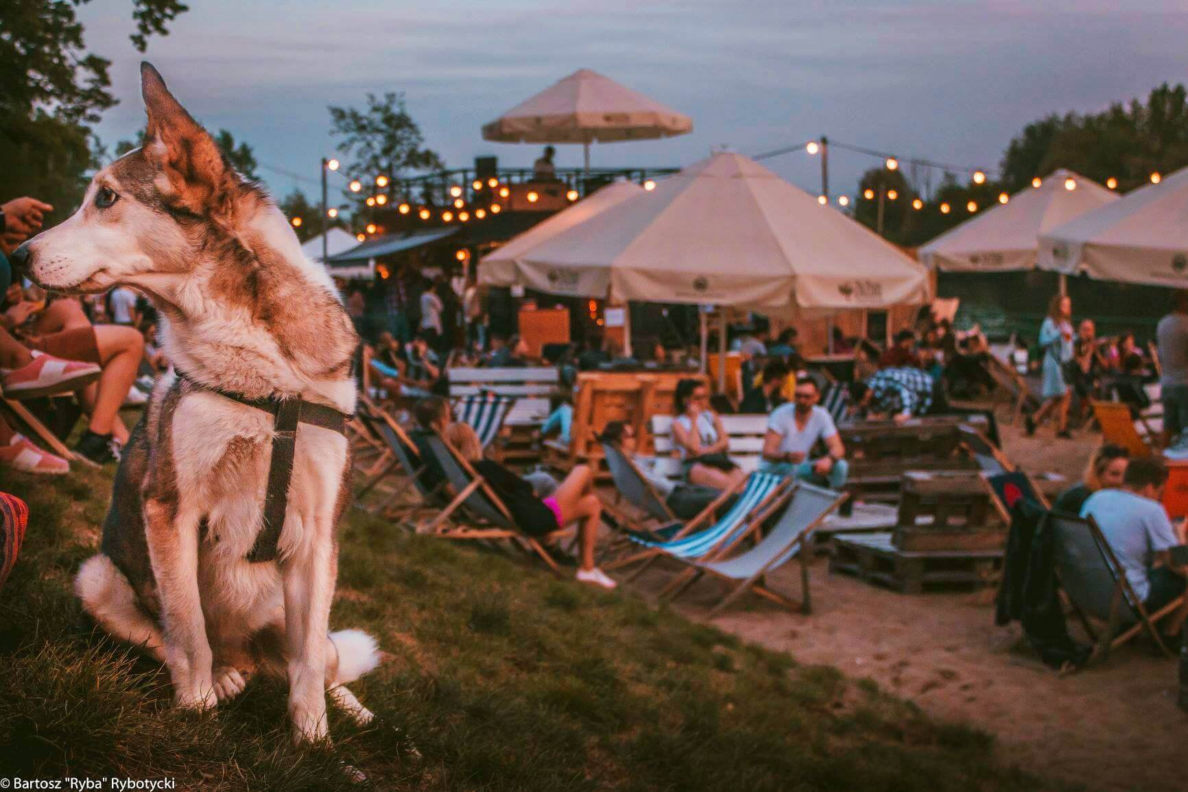 zazoo chillout beach bar wroclaw 3